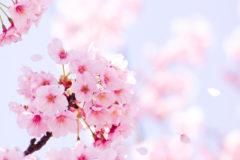 3月20日は春分の日です。